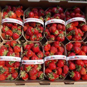 fraise -fraisière du nord est